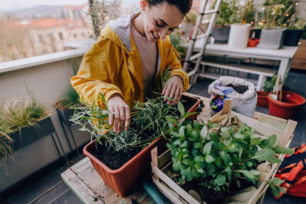 Young woman gardening herbs on her balcony